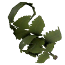 ItemFern.png